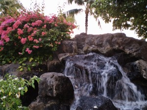Hawaiian Magenta Flowers Flourishing on a Refreshing Waterfall and Rockbed