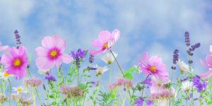 Soul Healing Flower Image2